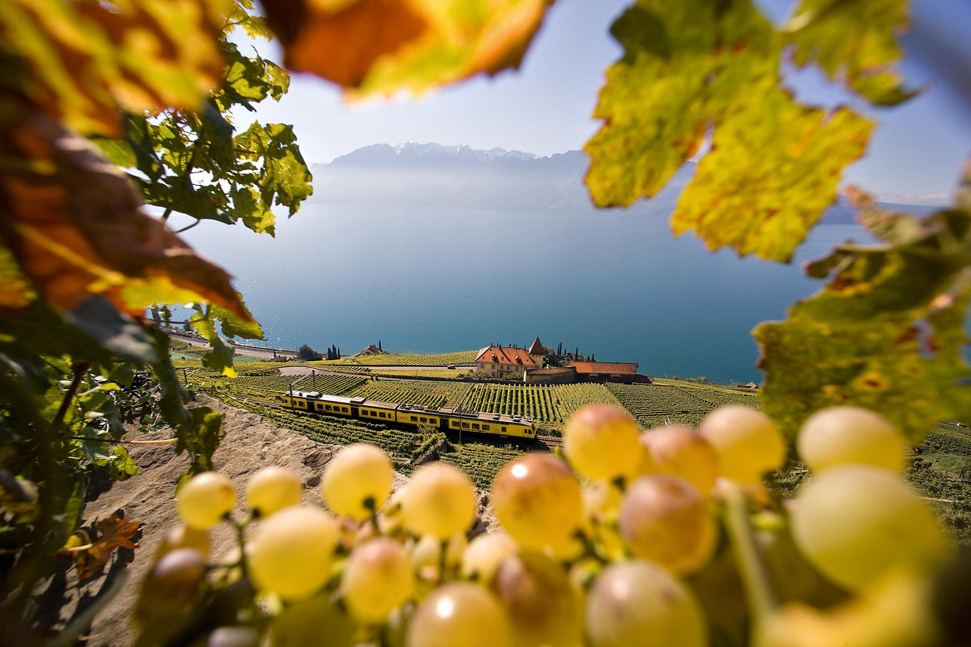 Train des Vignes train ride Vevey-Puidoux