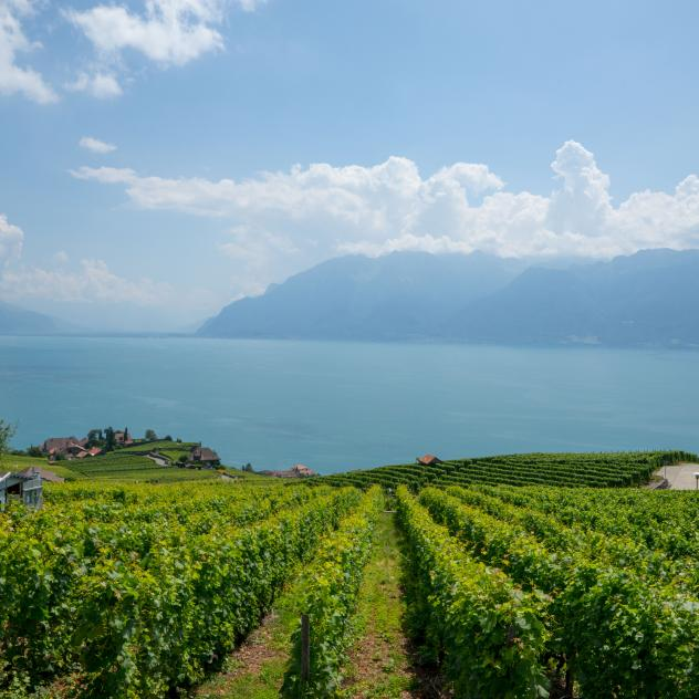 Wine growing and tourism in Lavaux