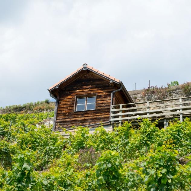 The Winegrower's Hut