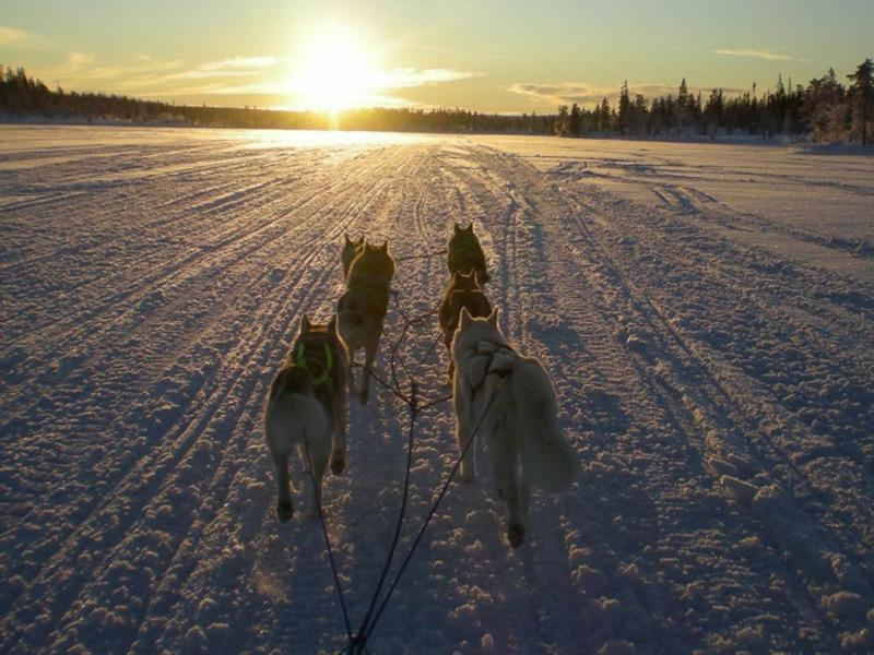 Sled dogs in Saint-Cergue © Team Nature