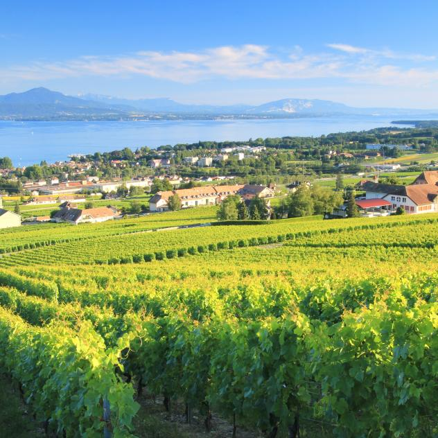 Weekend to discover Chasselas and Lake Geneva