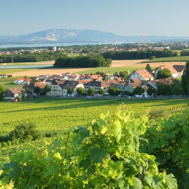 Vineyard walks of Luins & Vinzel