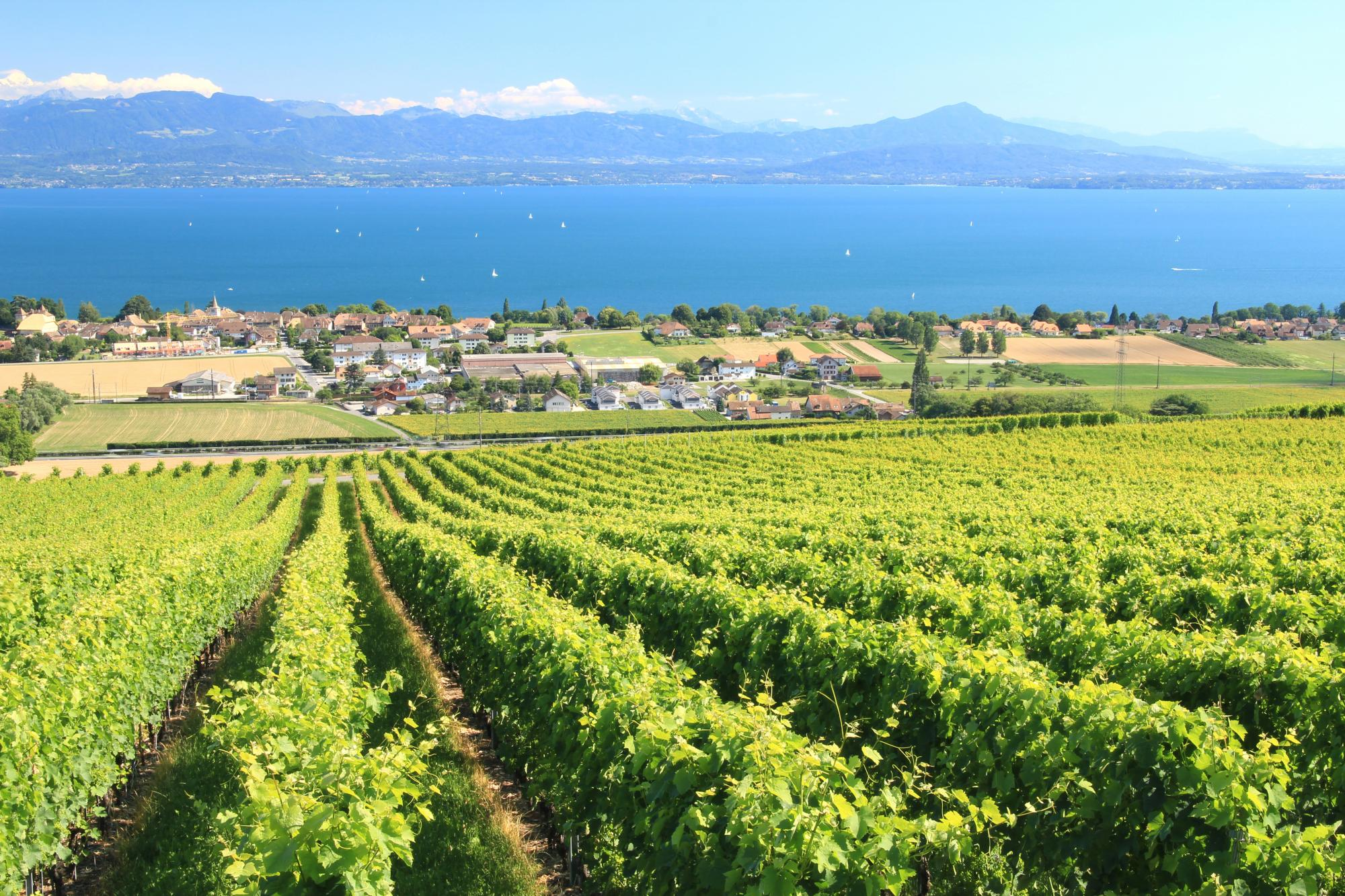 Le canton de vaud six r gions et huit appellations - Office du tourisme morges ...