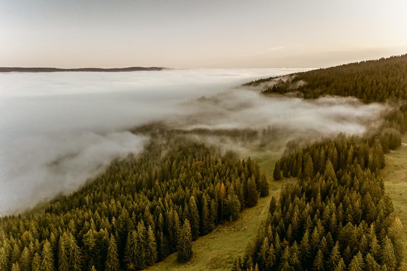 RISOUD FOREST