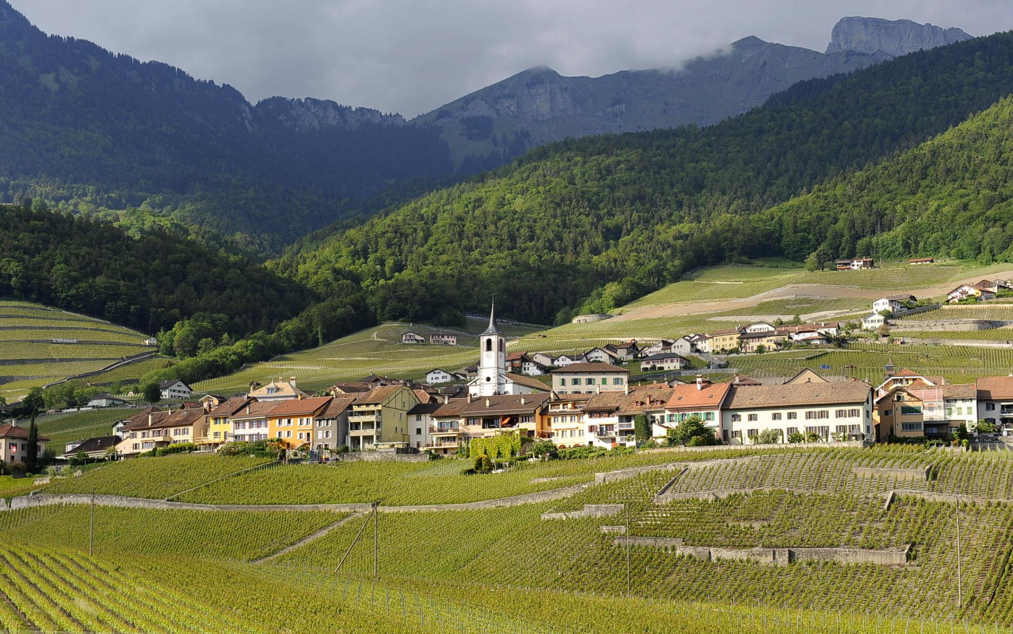 "The ""Chablais"" Vineyard Trail"