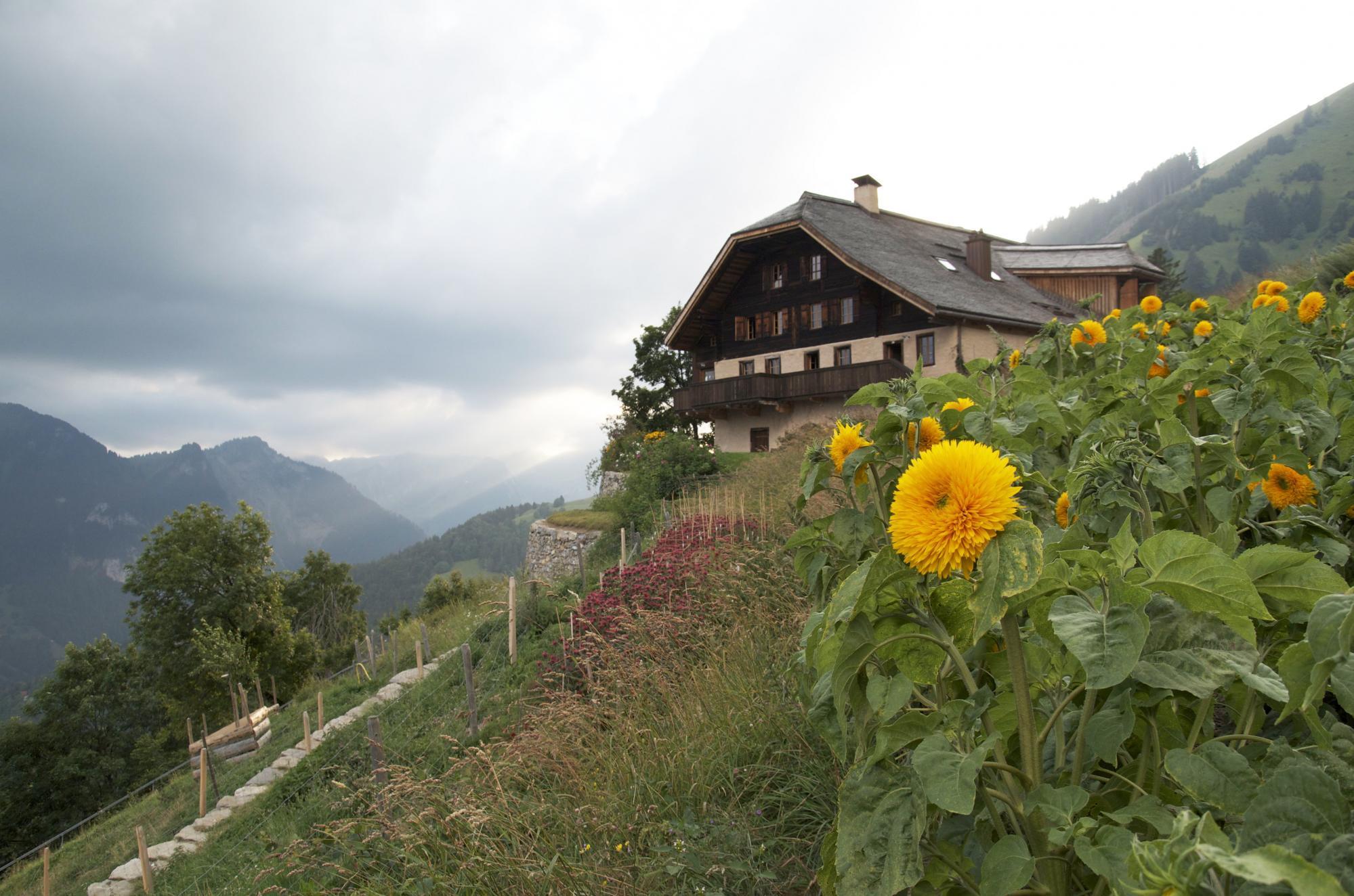 Le jardin des monts s rl pays d 39 enhaut suisse - Les jardins des monts d or ...