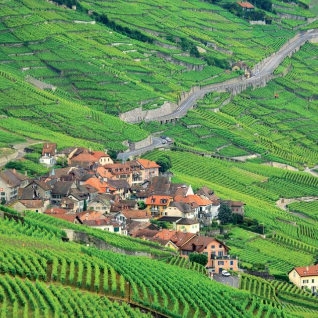 UNESCO-listed Lavaux vineyard terraces