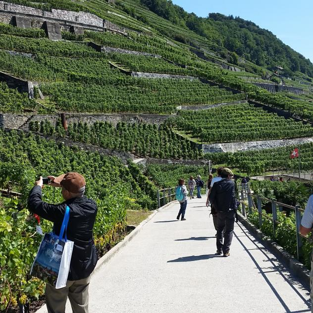 GUided tour in Lavaux UNESCO