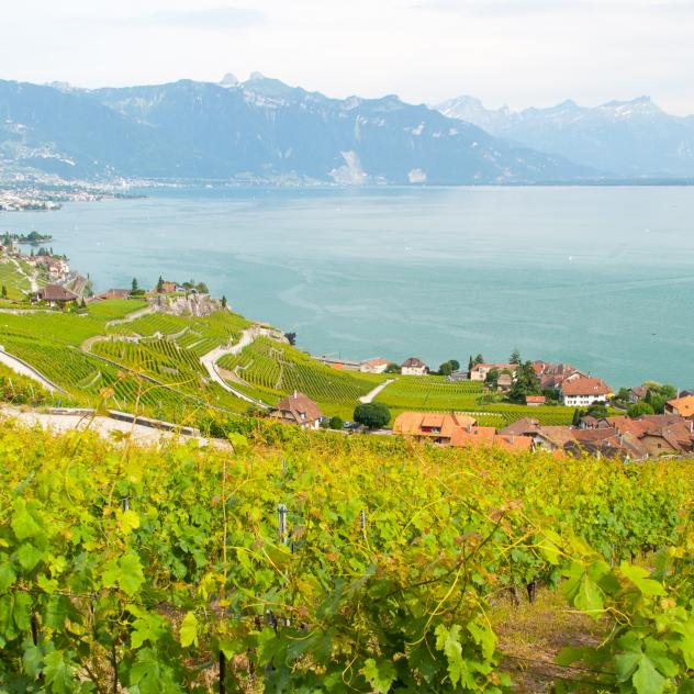 Lavaux Experience