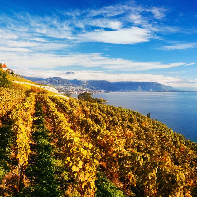 UNESCO-listed Lavaux vineyard terraces - © antares71 iStock