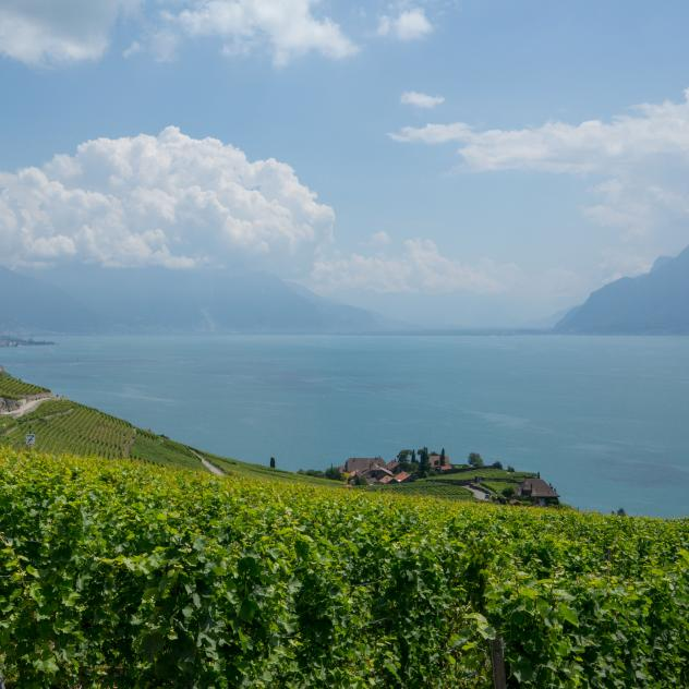 Cellars and wine tastings in Lavaux