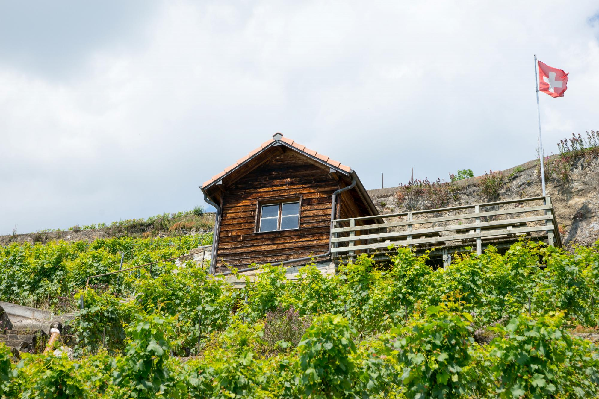 Winegrower capite in Lavaux