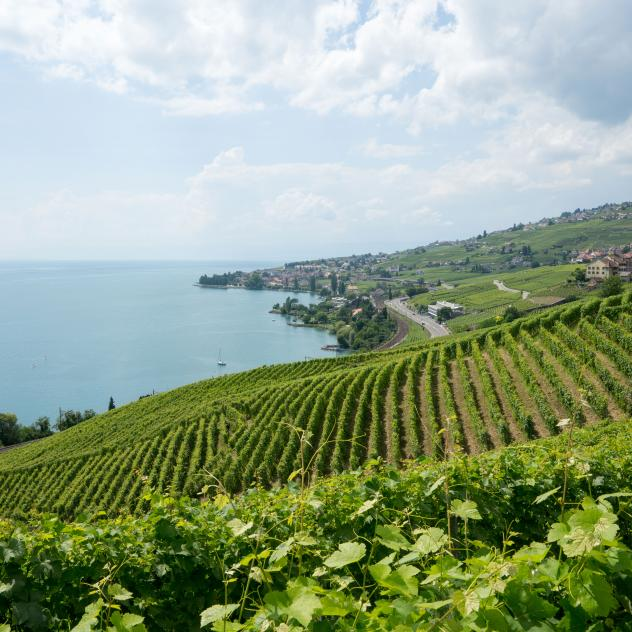 Lavaux grape varieties