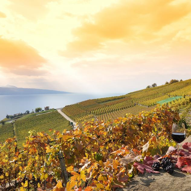 UNESCO-listed Lavaux vineyard terraces - © Pixabay / astra490