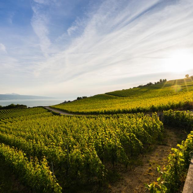 UNESCO-listed Lavaux vineyard terraces - © Karim Kanoun