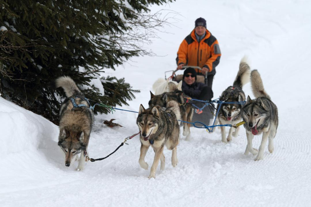 Sled dogs in Saint-Cergue