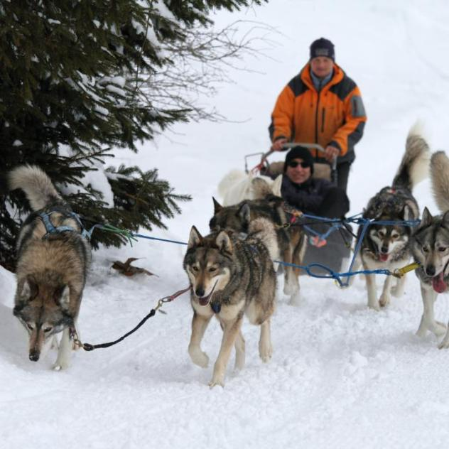 End of the season - Sled dogs in Saint-Cergue