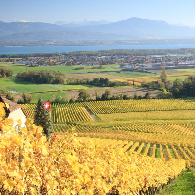 Nyon wines and vineyards