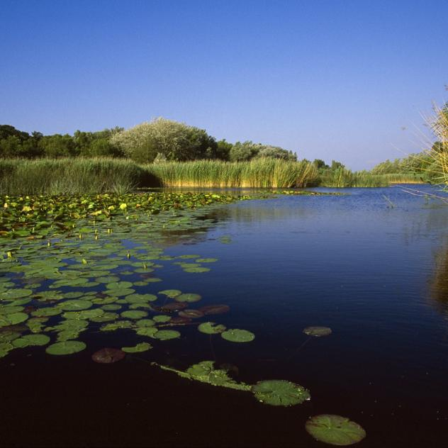 The Grande Cariçaie nature reserve