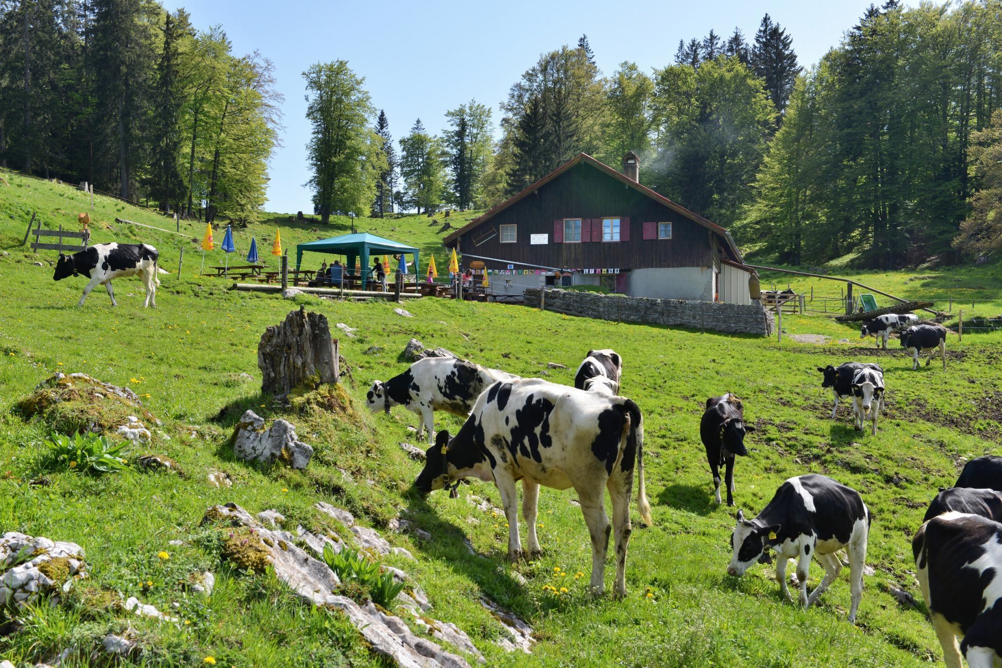 G 238 Te Du Mont Des Cerfs Yverdon Les Bains Region Jura Lac