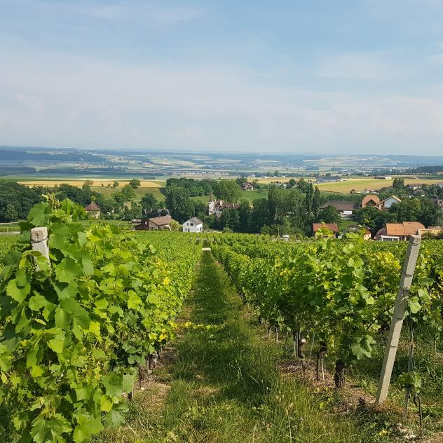 Vineyard walk in Côtes de l'Orbe - Foot of the Jura