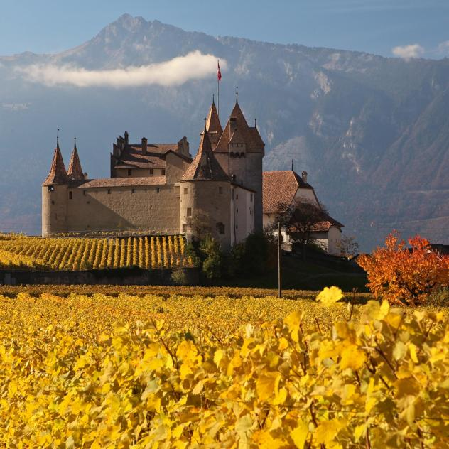Aigle Castle - Autumn Wineyard