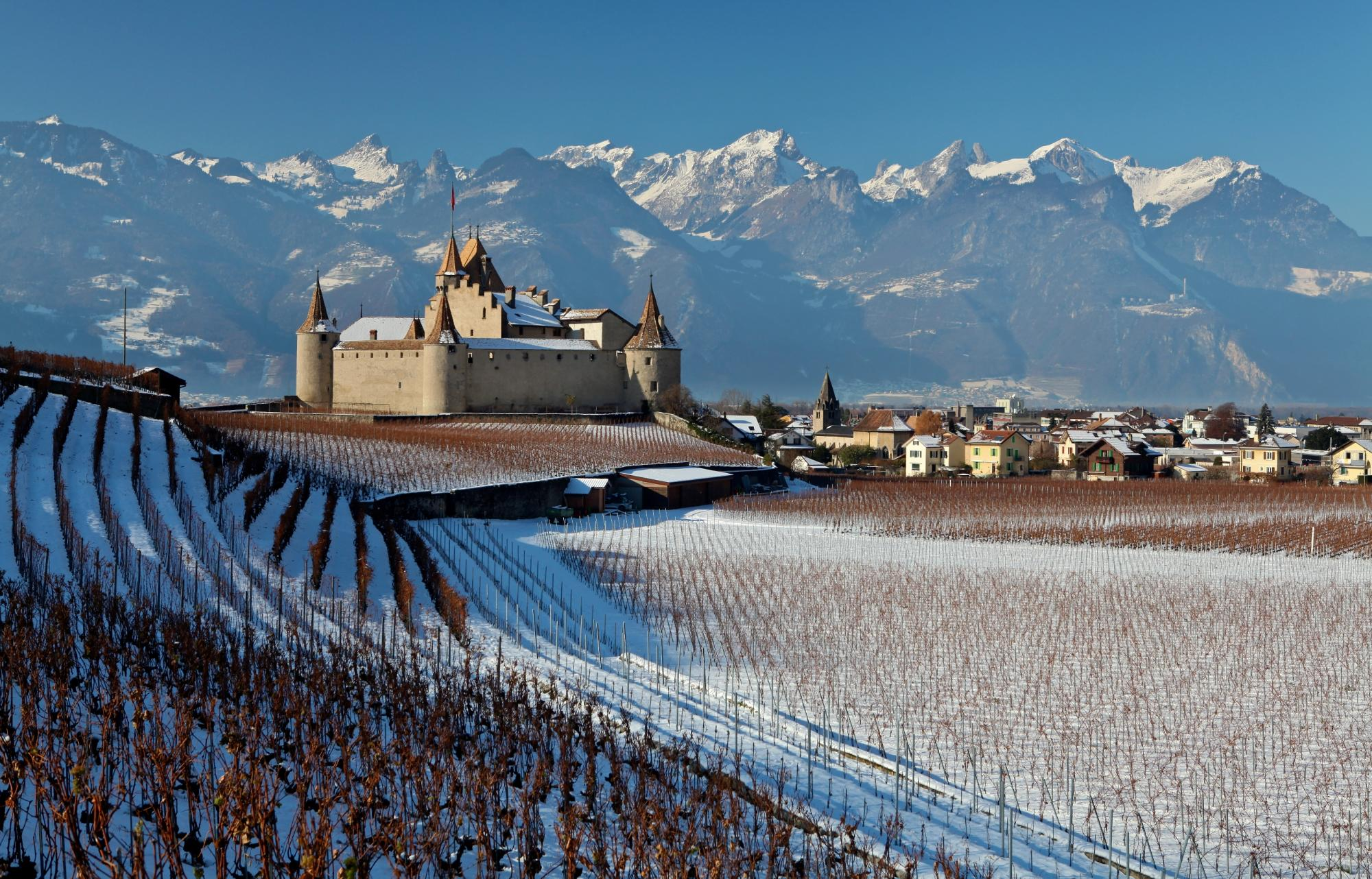 Château d'Aigle with vines - winter - Aigle