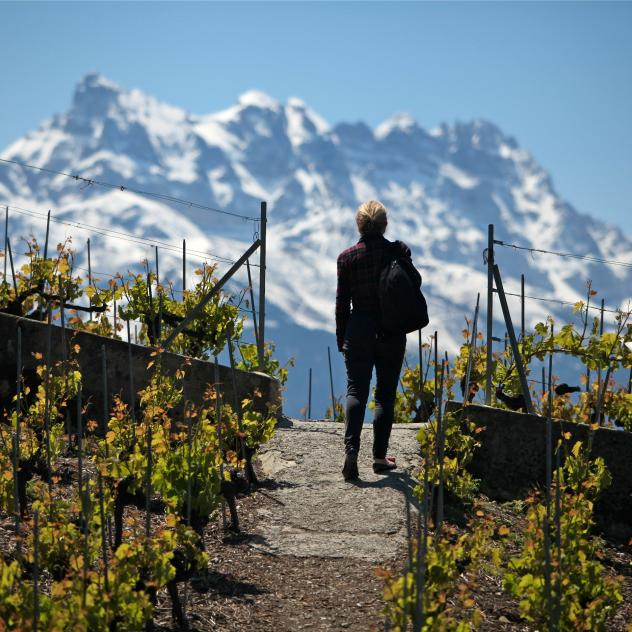 Vineyard walk in Chablais