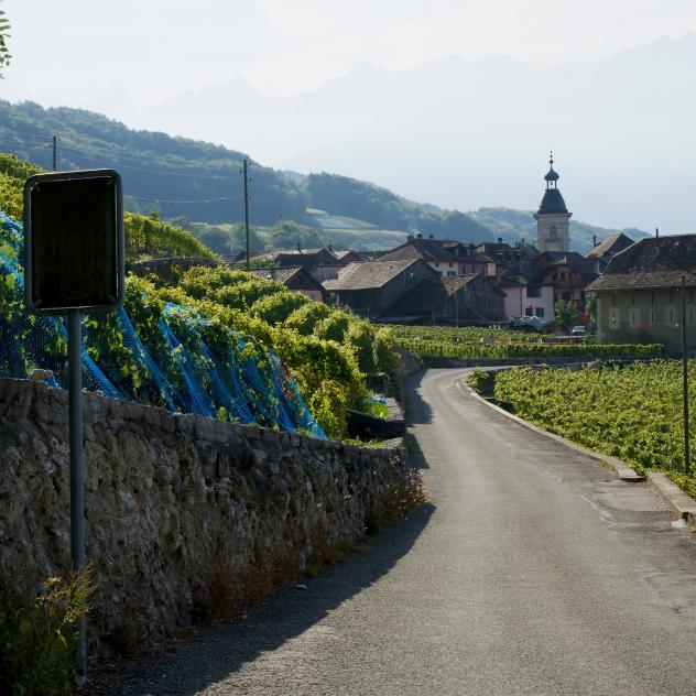 Guided walk Ollon and its wine growers