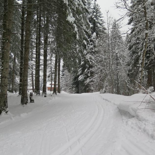 Cross country skiing - Plans-sur-Bex