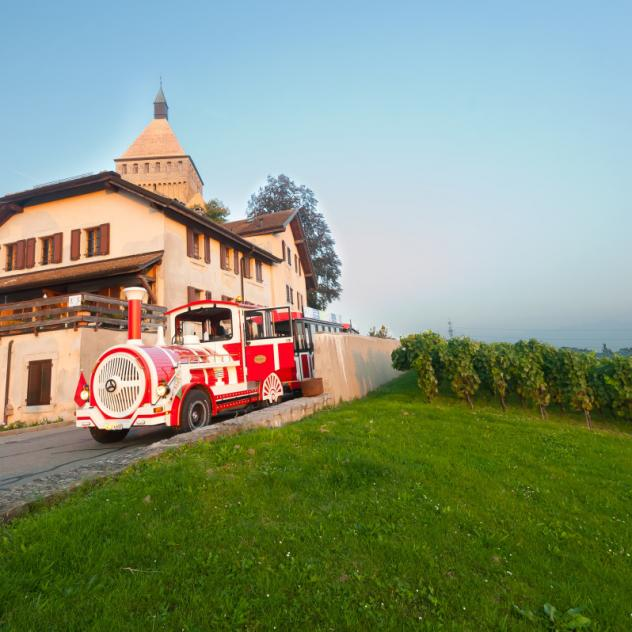 Vineyard train