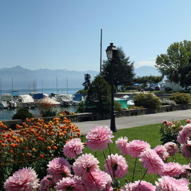 The Quay of the Dahlias