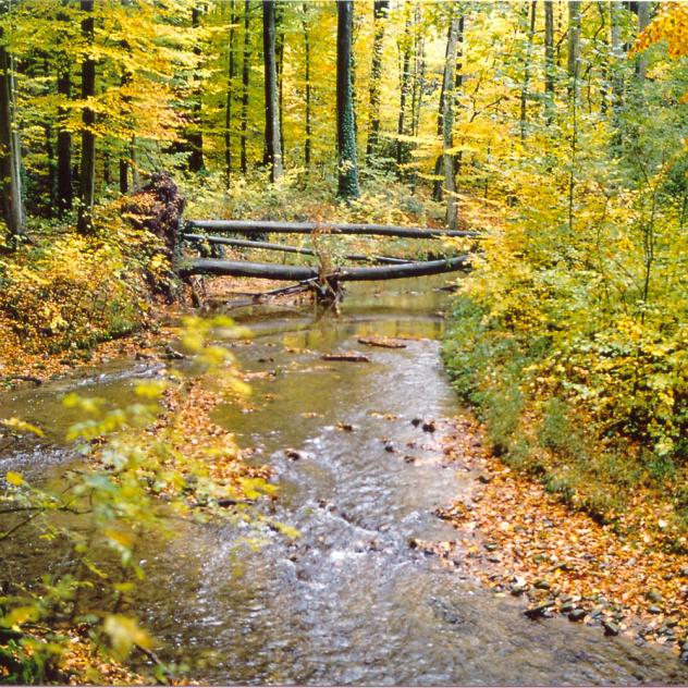 The Trout Trail