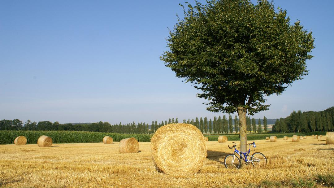 Bike field Broye