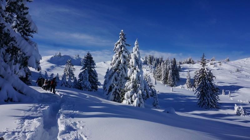 Guided snowshoe hikes and ski touring