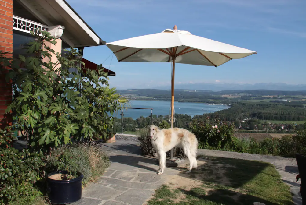 Swiss Borzoi House