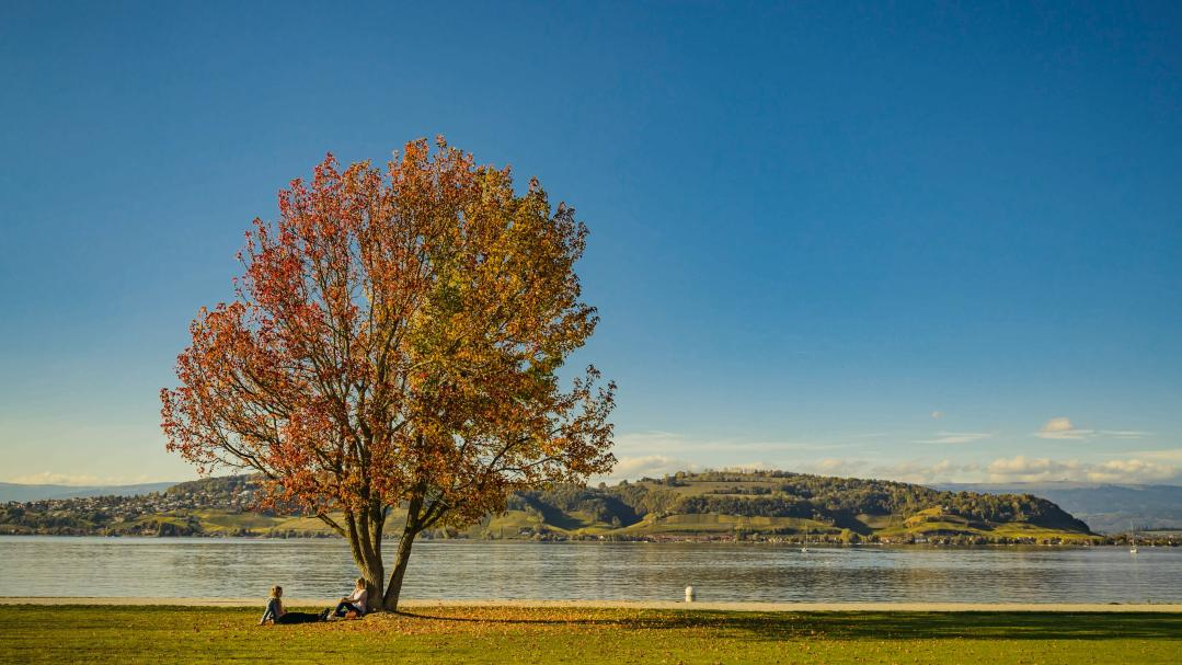 The region Lake Murten in autumn