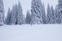 Cross -country skiing, Mont-Soleil/Mont-Crosin