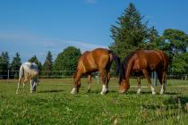 Retirement homes for horses, Le Jeanbrenin